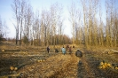 Wycinka drzew_62